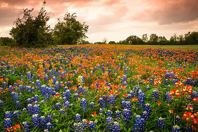 A Field Of Bluebonnet And Indian Paintbrush - Wildflower Field In Texas Print by Ellie Teramoto