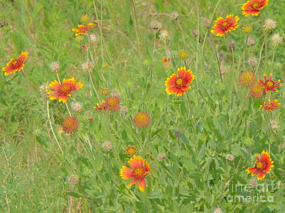 Photograph - A Field Of Vivid Orange by Audrey Van Tassell