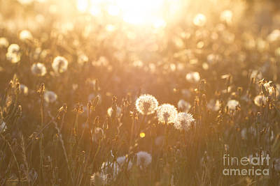 Photograph - A Field Of Wishes by Linda Lees
