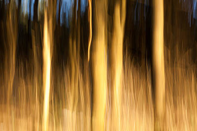 Photograph - A Fiery Forest by Davorin Mance