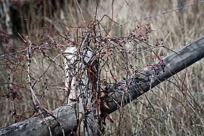 Mess Photograph - A Fine Mess by Teresa Mucha