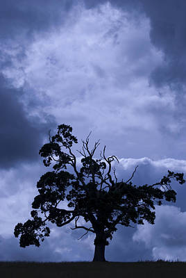 Photograph - A Flash Of Blue Tree by Sally Ross