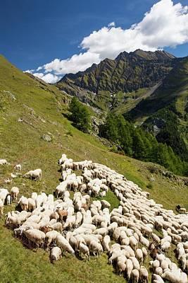 A Flock Of Sheep By The Refuge Bertone Art Print