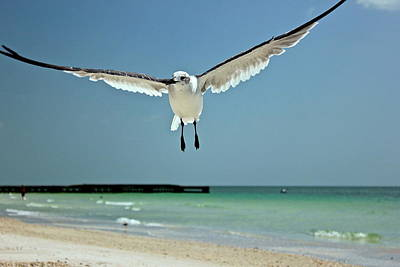 Photograph - A Florida Gull by Amazing Jules
