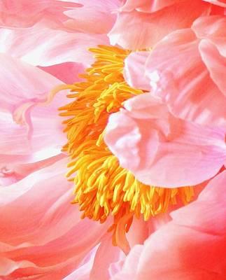 Photograph - A Flower Effect by Stephanie Callsen