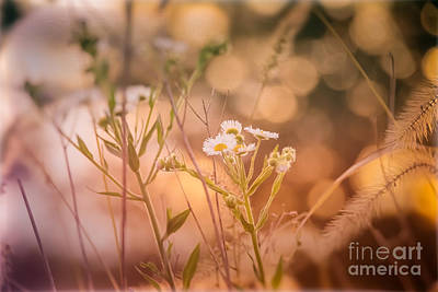 Photograph - A Flower For You by Julie Clements