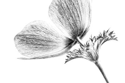 Photograph - A Flower Of No Color by Caitlyn  Grasso