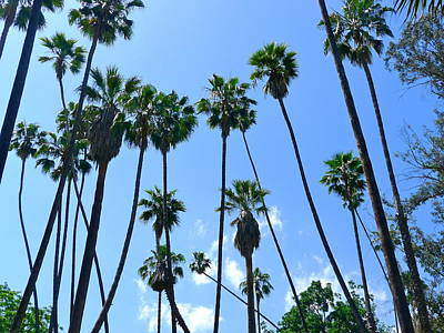 Photograph - A Flurry Of Palms by Denise Mazzocco