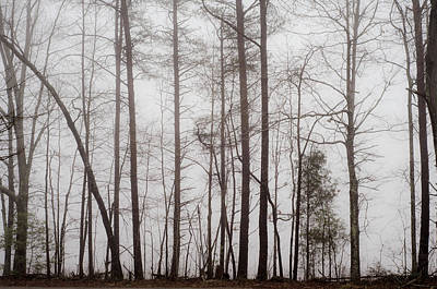 Photograph - A Foggy Day In Virginia by Laura DAddona