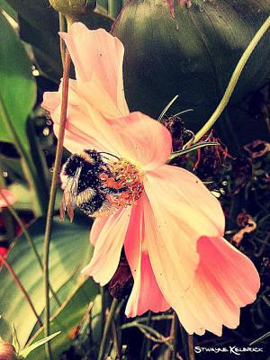 Photograph - A Foraging Bee by Stwayne Keubrick