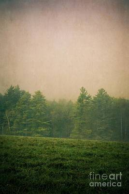 Photograph - A Forest by Edward Fielding