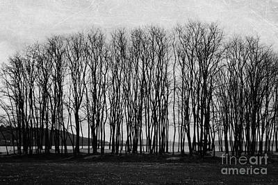 A Forest Of Trees Art Print by Sylvia Cook