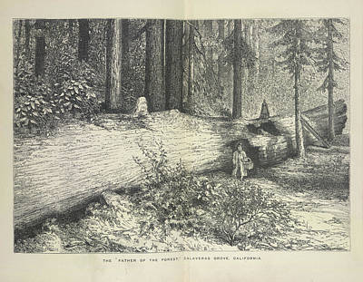 A Forest Scene Art Print by British Library