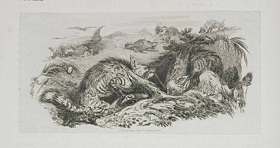Landseer Wall Art - Photograph - A Fox by British Library