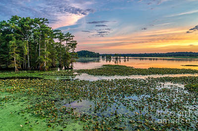 Cypress Swamp Photograph - A Frogs Dream by Anthony Heflin