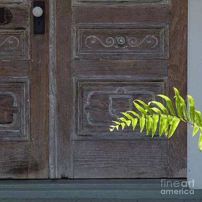 Photograph - A Frond Welcome by Barbie Corbett-Newmin