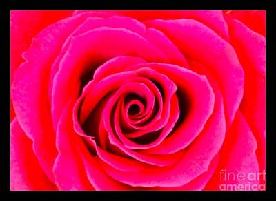 Photograph - A Fuschia Pink Rose by Joan-Violet Stretch