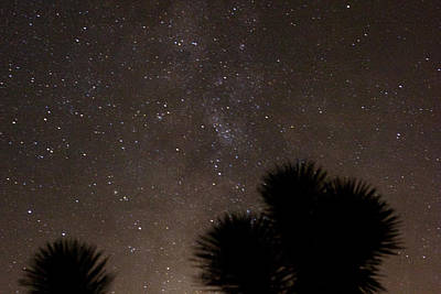 Galactic Alignment Photograph - A Galaxy And A Joshua Tree 1 by Carolina Liechtenstein