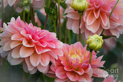 Nighttime Street Photography - A Gathering of Dahlias by Patricia Babbitt