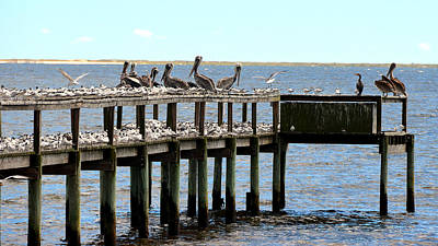Photograph - A Gathering Of Sea Birds by Carla Parris