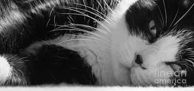 Photograph - A Gentle Cat - Monochrome by David Warrington
