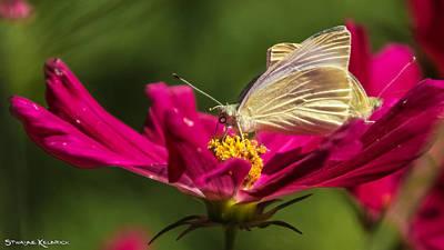 Photograph - A Georgous Butterfly Macrophotography by Stwayne Keubrick