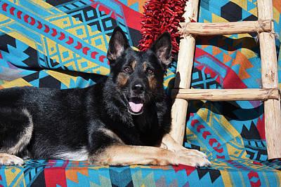 Herding Dog Photograph - A German Shepherd Lying by Zandria Muench Beraldo