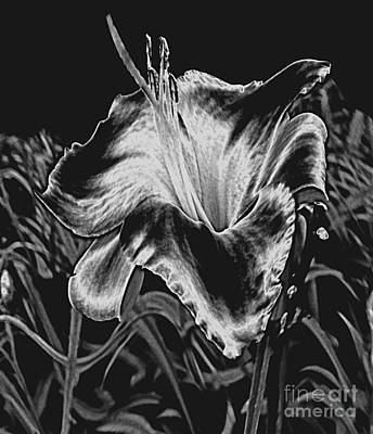 A Ghostly Daylily Bloom In Original Black And White Print by ImagesAsArt Photos And Graphics