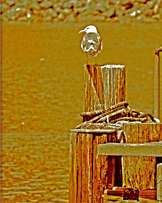Photograph - A Glance Portside by Joseph Coulombe