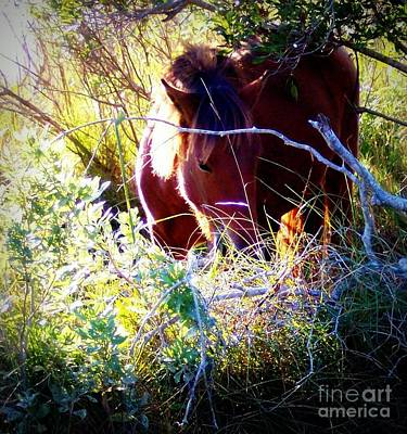 Photograph - A Glimpse Of Graze by Janine Riley