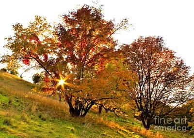A Golden Glowing Autumn Sunset Art Print by Jay Nodianos
