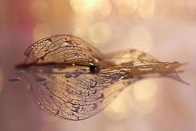 Closeup Wall Art - Photograph - A Golden Leaf by Oranit Turgeman