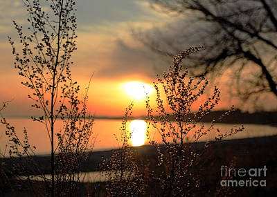 A Golden Moment In Time Art Print by Inspired Nature Photography Fine Art Photography
