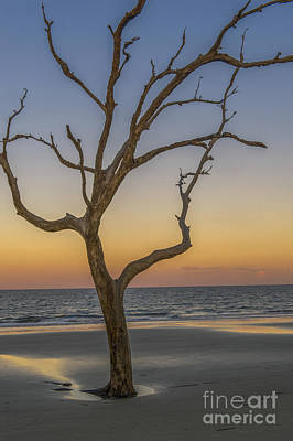 Photograph - A Golden Sunset On Jekyll Island Georgia by Willie Harper