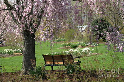 Photograph - A Good Place To Read A Book by Living Color Photography Lorraine Lynch