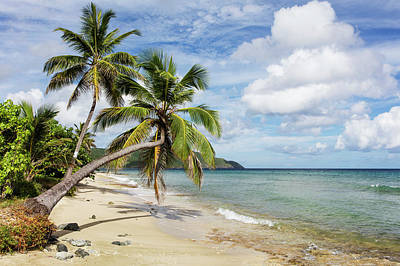 Photograph - A Gorgeous Palm Tree Stretches by Jenna Szerlag