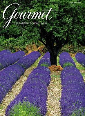 In A Row Photograph - A Gourmet Cover Of A Lavender Field by Julian Nieman