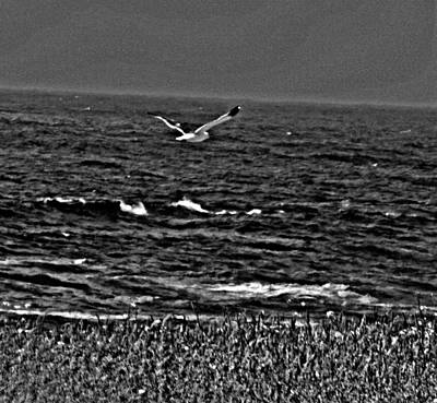 Photograph - A Gr8 Day To Fly by Joseph Coulombe