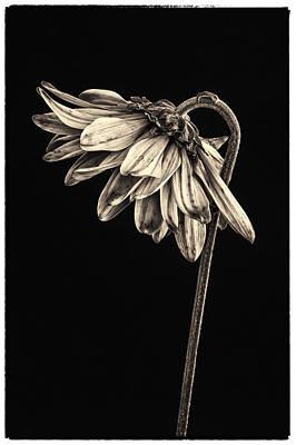 Flowers Photograph - A Graceful Bow by Martin Belan
