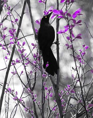 Radiant Image Photograph - A Grackle In Spring by Gothicrow Images