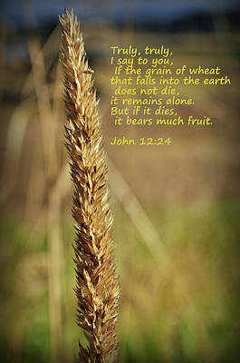 Photograph - A Grain Of Wheat by Tikvah's Hope