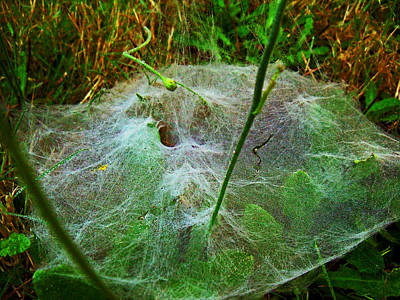 Photograph - A Grassy Web by Steve Battle