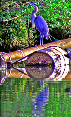 Photograph - A Great Blue Heron by Joseph Coulombe