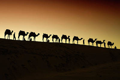 Repetition Photograph - A Group Of Camel Herders by Piper Mackay