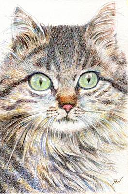 Drawing - A Handsome Cat  by Jingfen Hwu