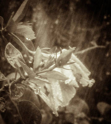 Photograph - A Hard Rain by Christy Usilton