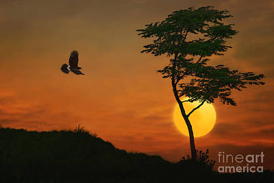 A Hawk In The Sunset Art Print by Tom York Images