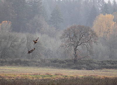Red Tail Hawk Wall Art - Photograph - A Hawk's Paradise by Angie Vogel