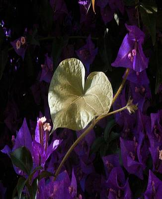 Photograph - A Heart Of Gold Leaf Of Morning Glory by Tracey Harrington-Simpson