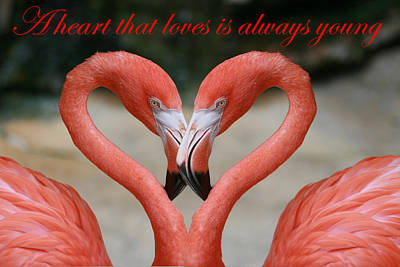 A Heart That Loves Is Always Young Art Print